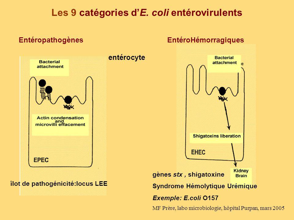 Les 9 catégories dE. coli entérovirulents entérocyte îlot de pathogénicité:locus LEE gènes stx, shigatoxine Syndrome Hémolytique Urémique Exemple: E.c