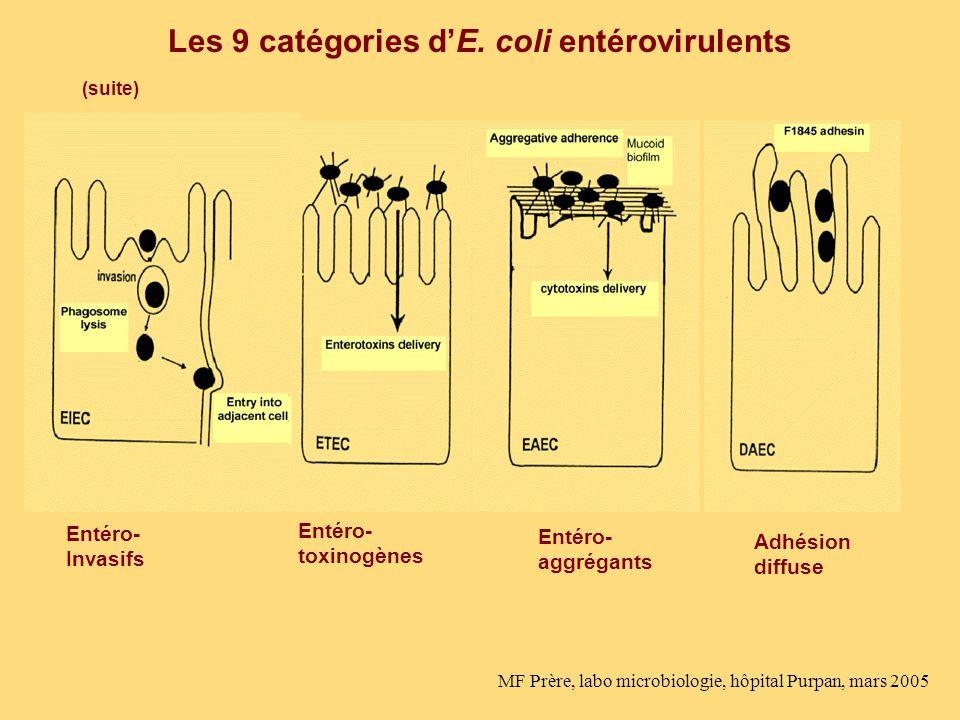 Les 9 catégories dE. coli entérovirulents Entéro- Invasifs Entéro- toxinogènes Entéro- aggrégants Adhésion diffuse (suite) MF Prère, labo microbiologi