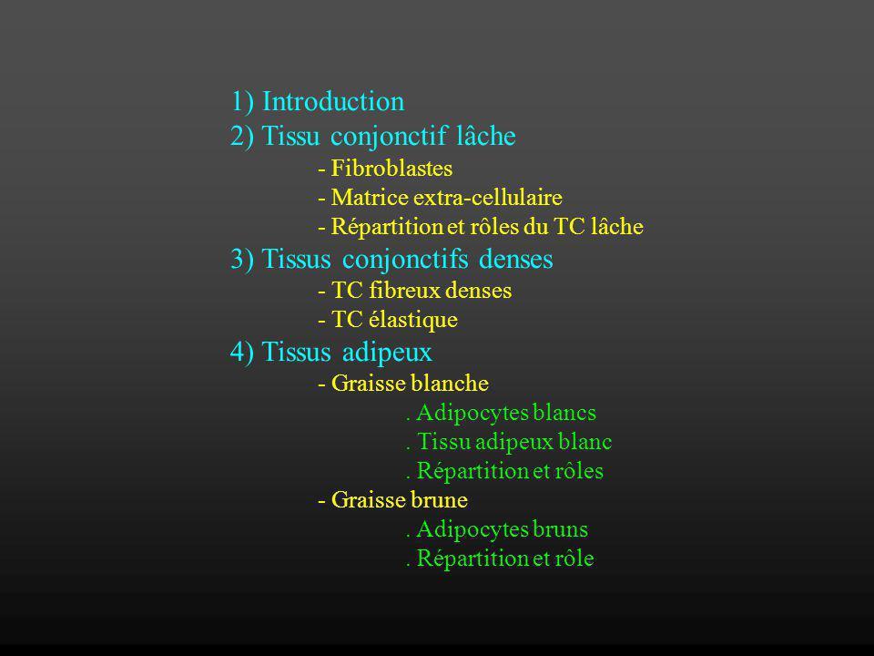 1) Introduction 2) Tissu conjonctif lâche - Fibroblastes - Matrice extra-cellulaire - Répartition et rôles du TC lâche 3) Tissus conjonctifs denses -
