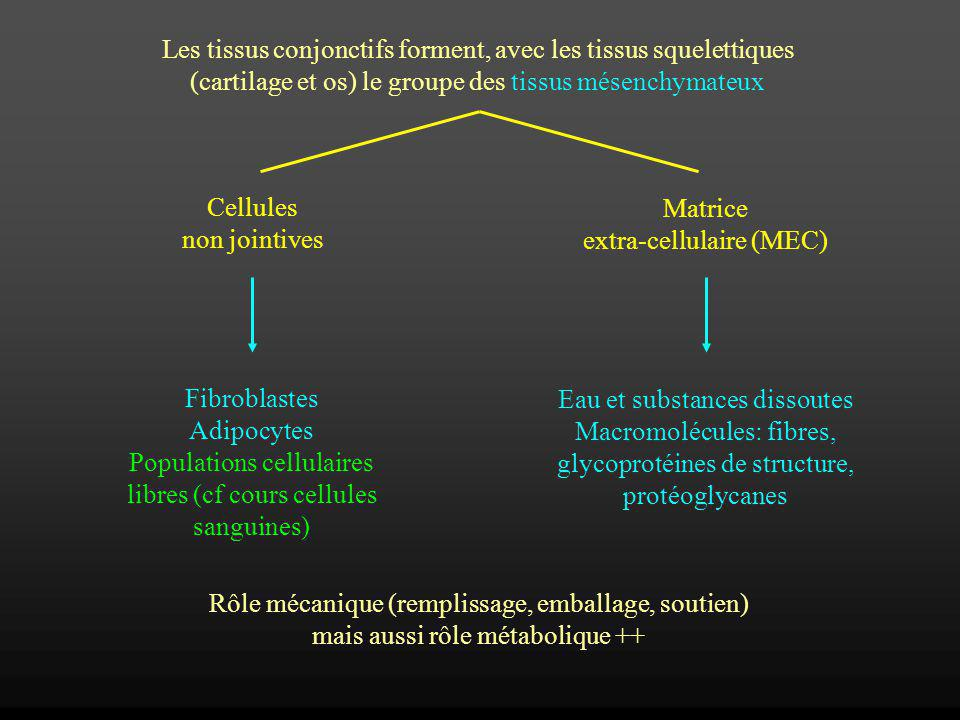 Les tissus conjonctifs forment, avec les tissus squelettiques (cartilage et os) le groupe des tissus mésenchymateux Cellules non jointives Matrice ext