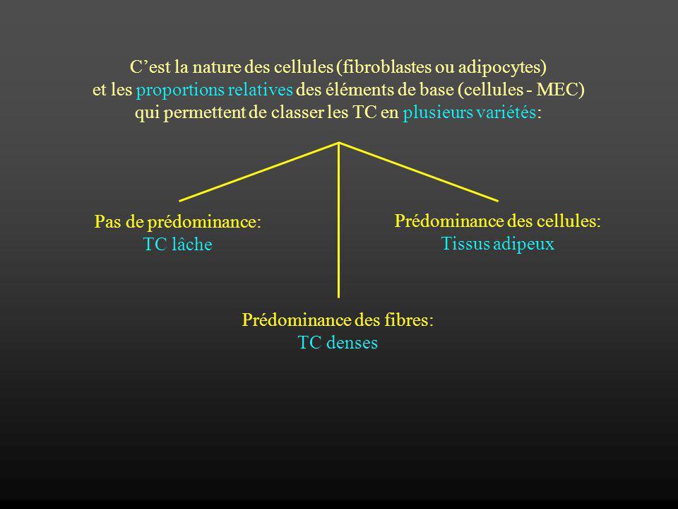 Cest la nature des cellules (fibroblastes ou adipocytes) et les proportions relatives des éléments de base (cellules - MEC) qui permettent de classer