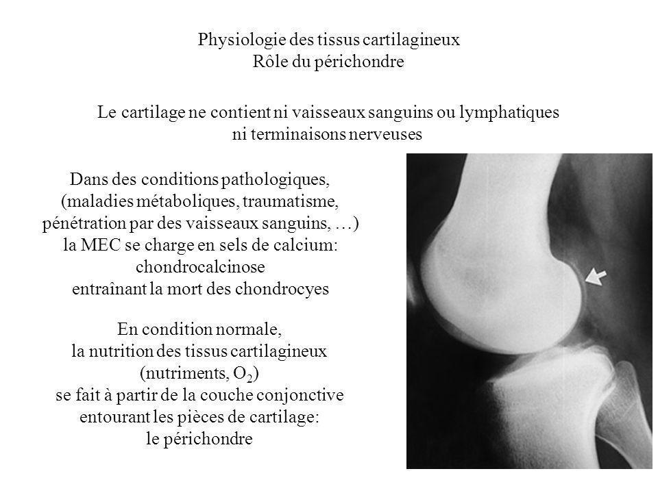Physiologie des tissus cartilagineux Rôle du périchondre Le cartilage ne contient ni vaisseaux sanguins ou lymphatiques ni terminaisons nerveuses Dans