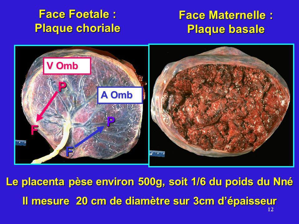 12 Face Foetale : Plaque choriale Face Maternelle : Plaque basale Le placenta pèse environ 500g, soit 1/6 du poids du Nné Il mesure 20 cm de diamètre sur 3cm dépaisseur A Omb V Omb F F P P