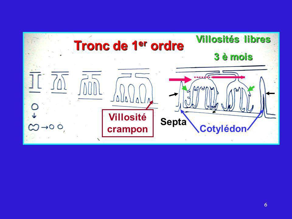 6 Septa Tronc de 1 er ordre Villosité crampon Villosités libres 3 è mois Cotylédon