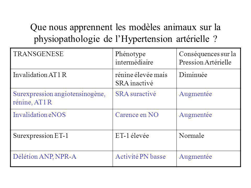Que nous apprennent les modèles animaux sur la physiopathologie de lHypertension artérielle ? TRANSGENESEPhénotype intermédiaire Conséquences sur la P
