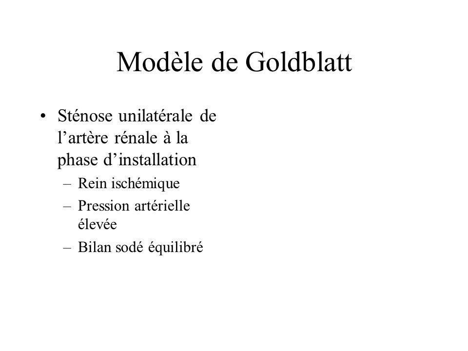 Modèle de Goldblatt Sténose unilatérale de lartère rénale à la phase dinstallation –Rein ischémique –Pression artérielle élevée –Bilan sodé équilibré