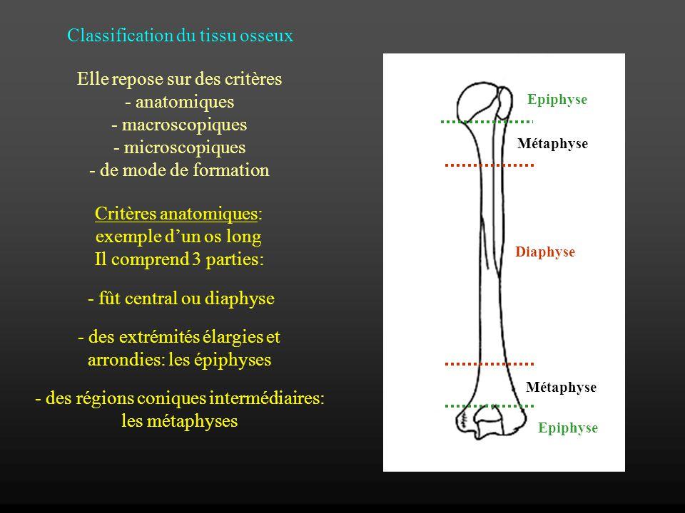 Classification du tissu osseux Elle repose sur des critères - anatomiques - macroscopiques - microscopiques - de mode de formation Critères anatomique