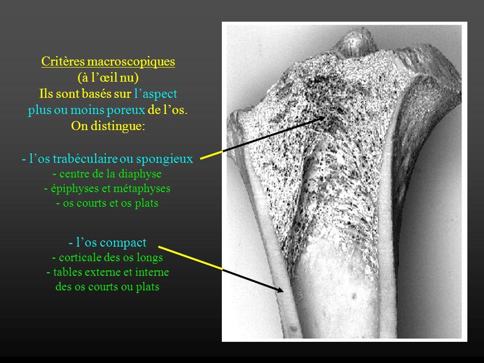 Critères macroscopiques (à lœil nu) Ils sont basés sur laspect plus ou moins poreux de los. On distingue: - los trabéculaire ou spongieux - centre de