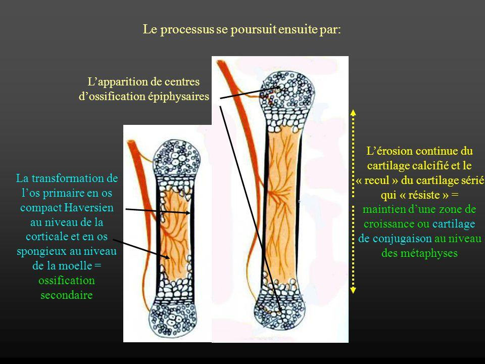 Le processus se poursuit ensuite par: Lapparition de centres dossification épiphysaires La transformation de los primaire en os compact Haversien au n