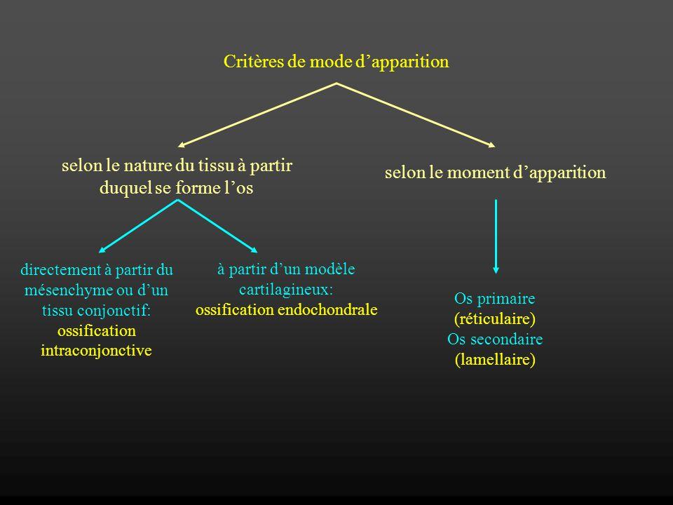 Critères de mode dapparition selon le nature du tissu à partir duquel se forme los selon le moment dapparition directement à partir du mésenchyme ou d