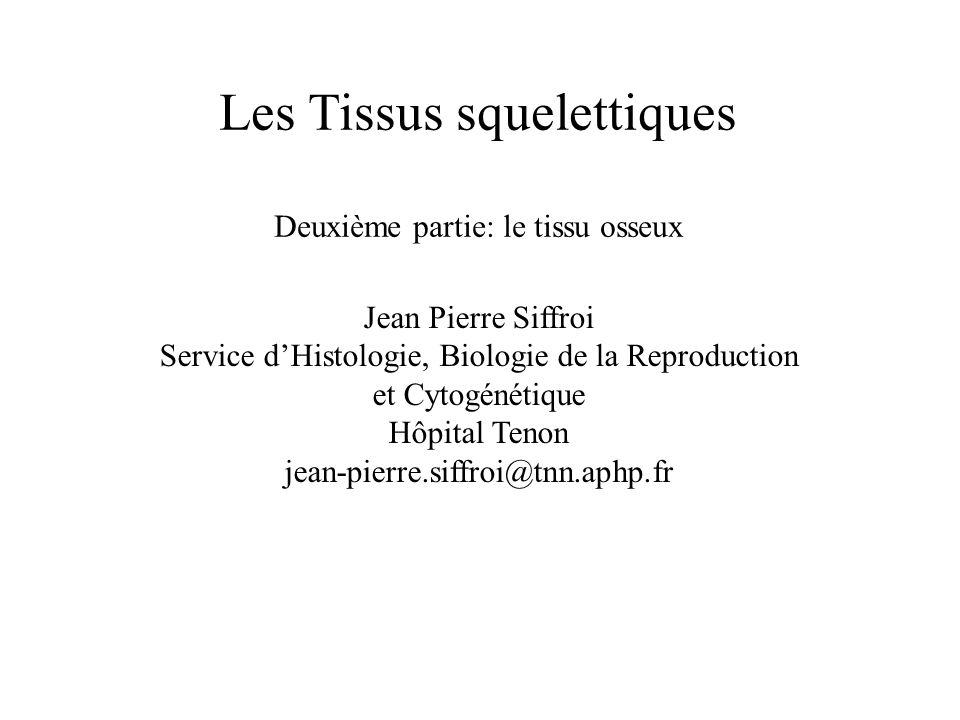 Les Tissus squelettiques Deuxième partie: le tissu osseux Jean Pierre Siffroi Service dHistologie, Biologie de la Reproduction et Cytogénétique Hôpita