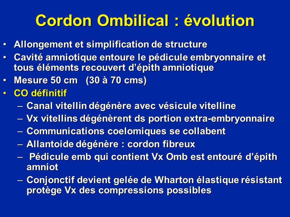 Cordon Ombilical : évolution Allongement et simplification de structureAllongement et simplification de structure Cavité amniotique entoure le pédicul