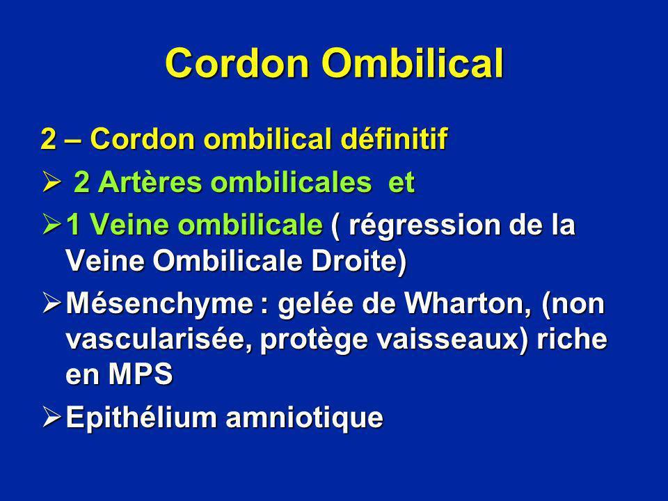 Cordon Ombilical 2 – Cordon ombilical définitif 2 Artères ombilicales et 2 Artères ombilicales et 1 Veine ombilicale ( régression de la Veine Ombilica