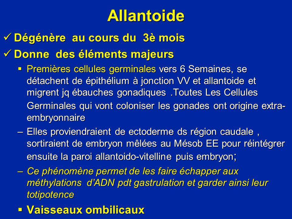 Allantoide Dégénère au cours du 3è mois Dégénère au cours du 3è mois Donne des éléments majeurs Donne des éléments majeurs Premières cellules germinal