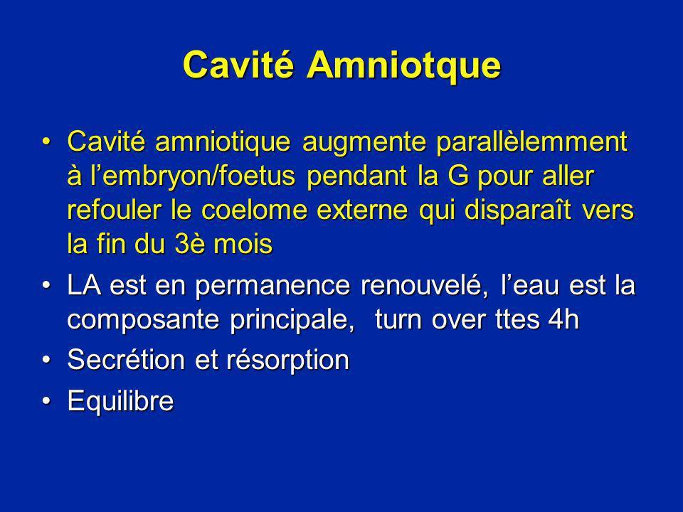 Cavité Amniotque Cavité amniotique augmente parallèlemment à lembryon/foetus pendant la G pour aller refouler le coelome externe qui disparaît vers la