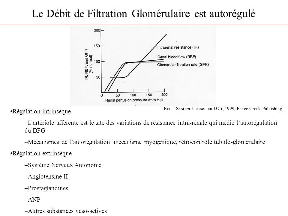 Le Débit de Filtration Glomérulaire est autorégulé Renal System Jackson and Ott, 1999, Fence Creek Publishing Régulation intrinsèque –Lartériole afférente est le site des variations de résistance intra-rénale qui médie lautorégulation du DFG –Mécanismes de lautorégulation: mécanisme myogénique, rétrocontrôle tubulo-glomérulaire Régulation extrinsèque –Système Nerveux Autonome –Angiotensine II –Prostaglandines –ANP –Autres substances vaso-actives