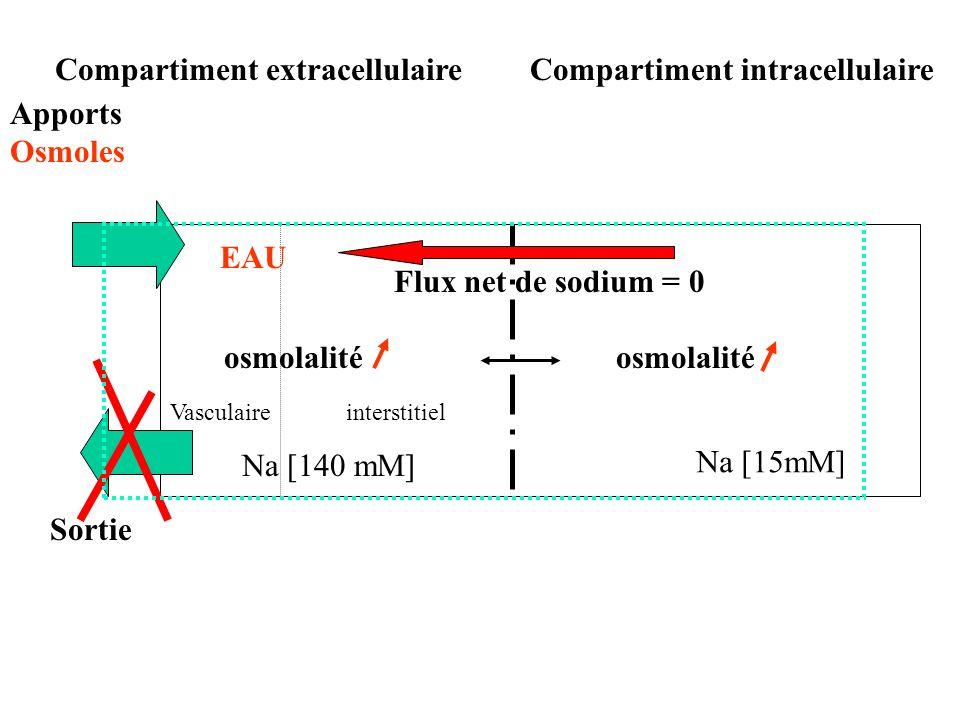 Sortie osmolalité interstitielVasculaire Na [15mM] Na [140 mM] Flux net de sodium = 0 osmolalité Compartiment intracellulaireCompartiment extracellulaire Apports Osmoles EAU
