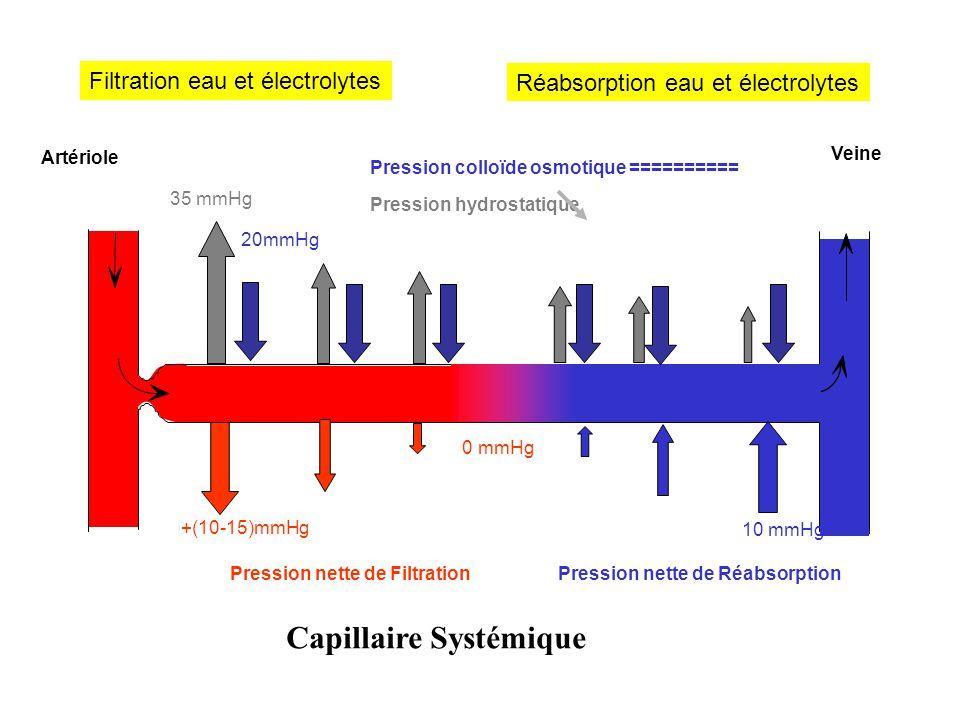 Artériole Veine Capillaire Systémique 35 mmHg Pression hydrostatique 20mmHg Pression colloïde osmotique ========== Filtration eau et électrolytes +(10-15)mmHg Pression nette de Filtration 10 mmHg Pression nette de Réabsorption 0 mmHg Réabsorption eau et électrolytes