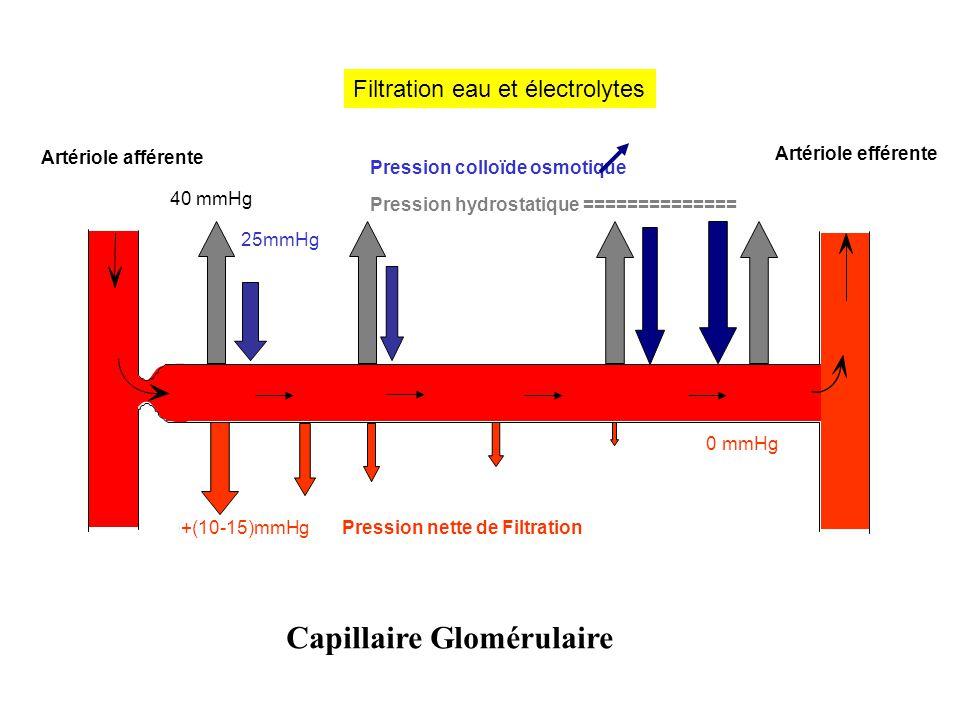 Artériole afférente 40 mmHg Pression hydrostatique ============== 25mmHg Pression colloïde osmotique Artériole efférente +(10-15)mmHgPression nette de Filtration Filtration eau et électrolytes 0 mmHg Capillaire Glomérulaire