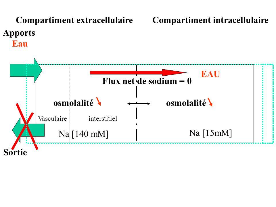 Sortie osmolalité interstitielVasculaire Na [15mM] Na [140 mM] Flux net de sodium = 0 osmolalité Compartiment intracellulaireCompartiment extracellulaire Apports Eau EAU