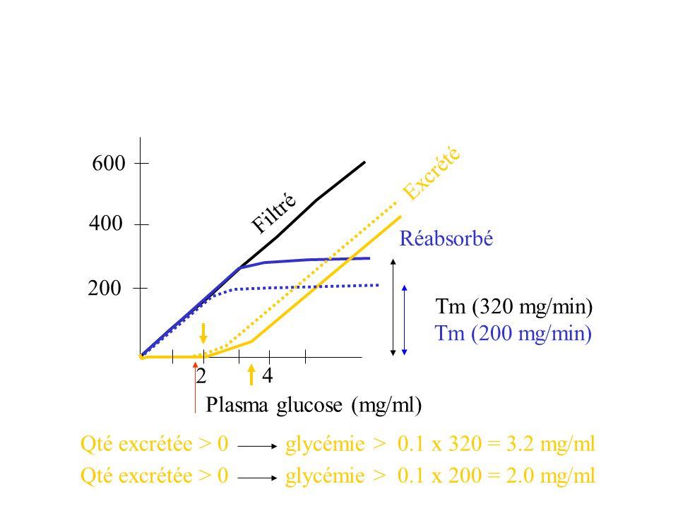 Tm (320 mg/min) 200 400 600 Tm (200 mg/min) Filtré Réabsorbé Excrété Plasma glucose (mg/ml) 2 4 Qté excrétée > 0 glycémie > 0.1 x 320 = 3.2 mg/ml Qté excrétée > 0 glycémie > 0.1 x 200 = 2.0 mg/ml