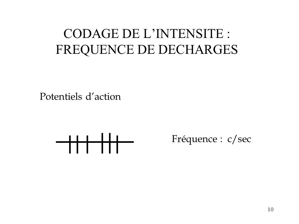 10 CODAGE DE LINTENSITE : FREQUENCE DE DECHARGES Fréquence : c/sec Potentiels daction