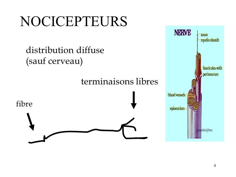 15 NEURONES SPÉCIFIQUES et NON-SPÉCIFIQUES c/sec Stimulation