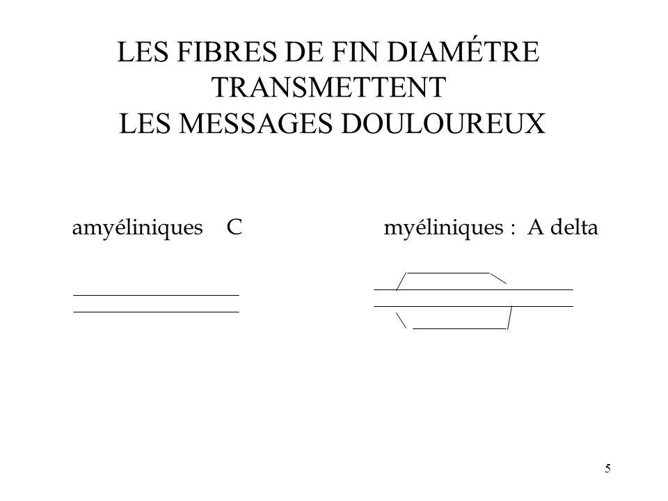 5 amyéliniques Cmyéliniques : A delta LES FIBRES DE FIN DIAMÉTRE TRANSMETTENT LES MESSAGES DOULOUREUX