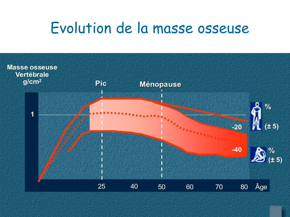 Evolution de la masse osseuse