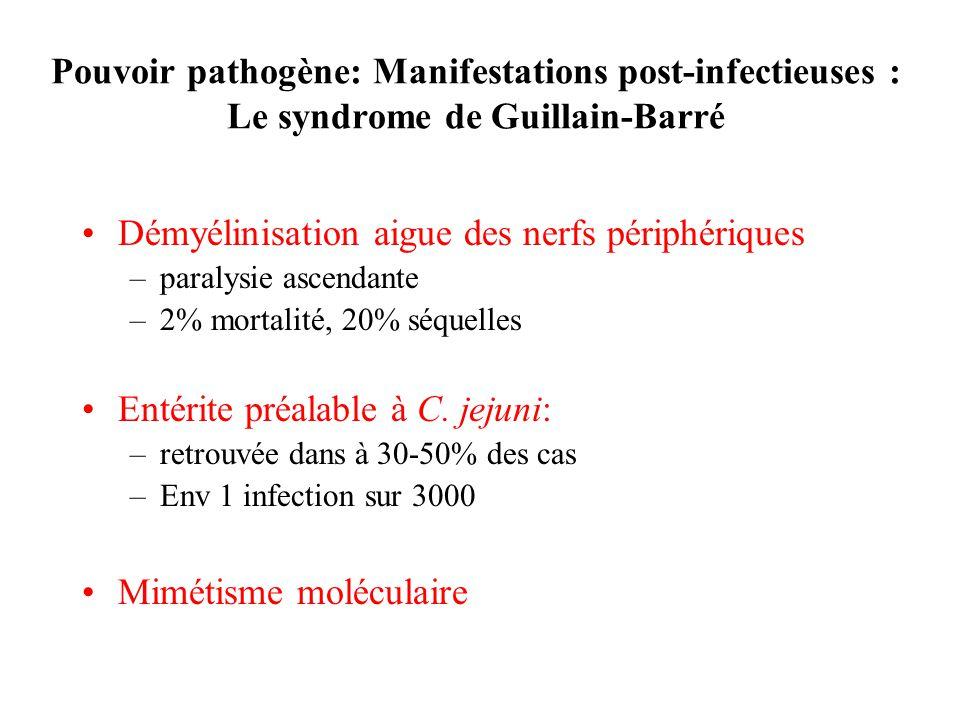 Pouvoir pathogène: Manifestations post-infectieuses : Le syndrome de Guillain-Barré Démyélinisation aigue des nerfs périphériques –paralysie ascendante –2% mortalité, 20% séquelles Entérite préalable à C.