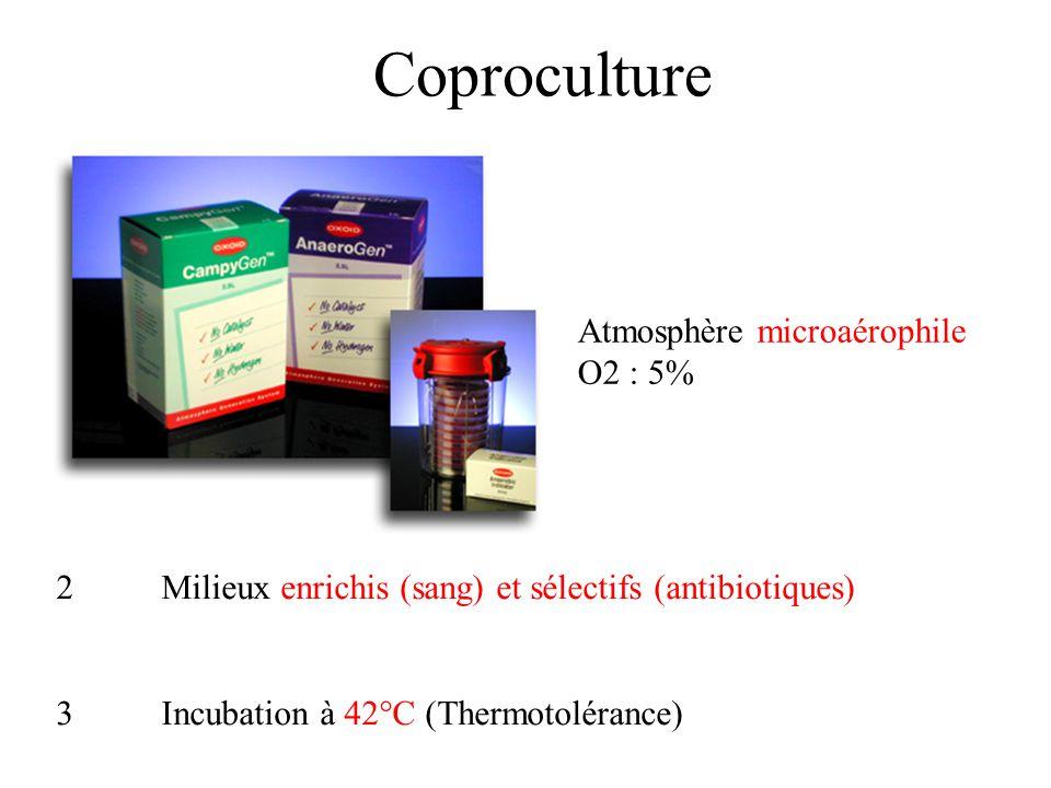 Coproculture 2Milieux enrichis (sang) et sélectifs (antibiotiques) 3Incubation à 42°C (Thermotolérance) Atmosphère microaérophile O2 : 5% 1