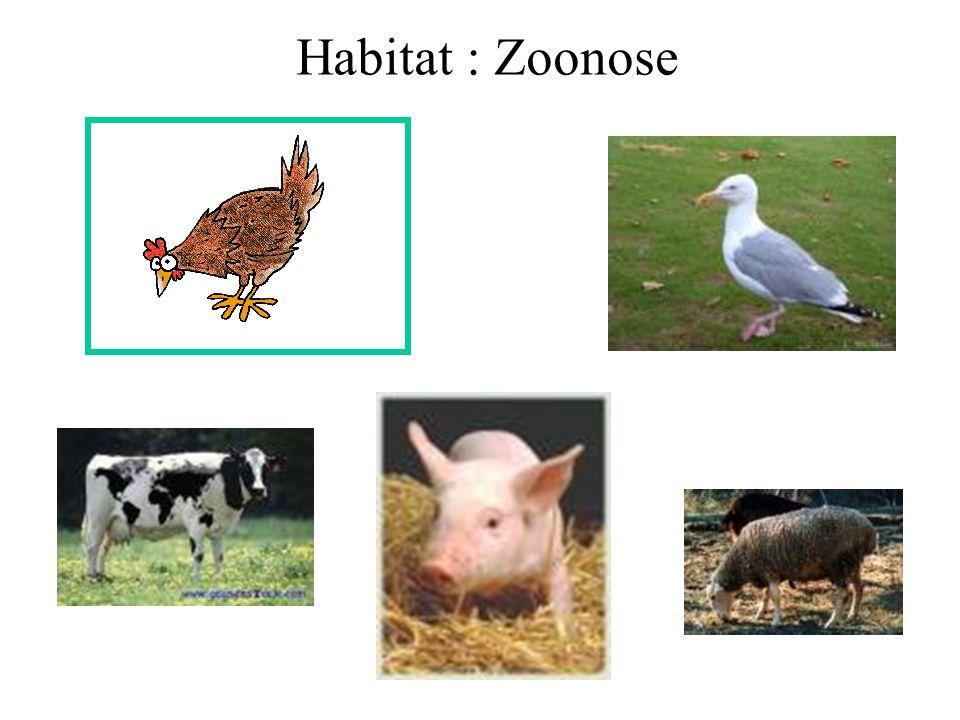Habitat : Zoonose