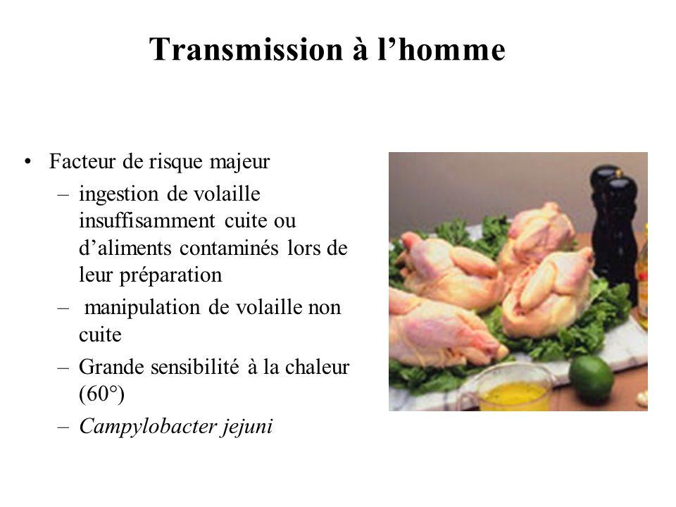 Transmission à lhomme Facteur de risque majeur –ingestion de volaille insuffisamment cuite ou daliments contaminés lors de leur préparation – manipula