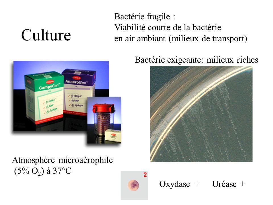 Culture Bactérie fragile : Viabilité courte de la bactérie en air ambiant (milieux de transport) Atmosphère microaérophile (5% O 2 ) à 37°C Bactérie exigeante: milieux riches Oxydase + Uréase +