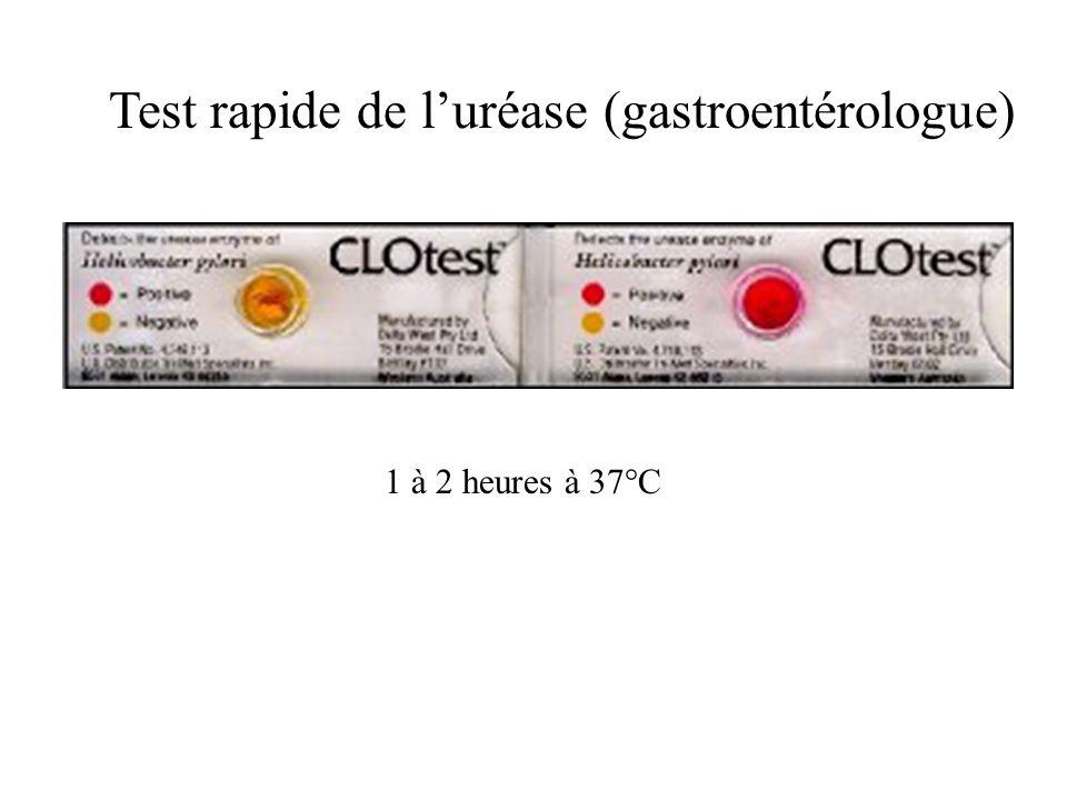 Test rapide de luréase (gastroentérologue) 1 à 2 heures à 37°C