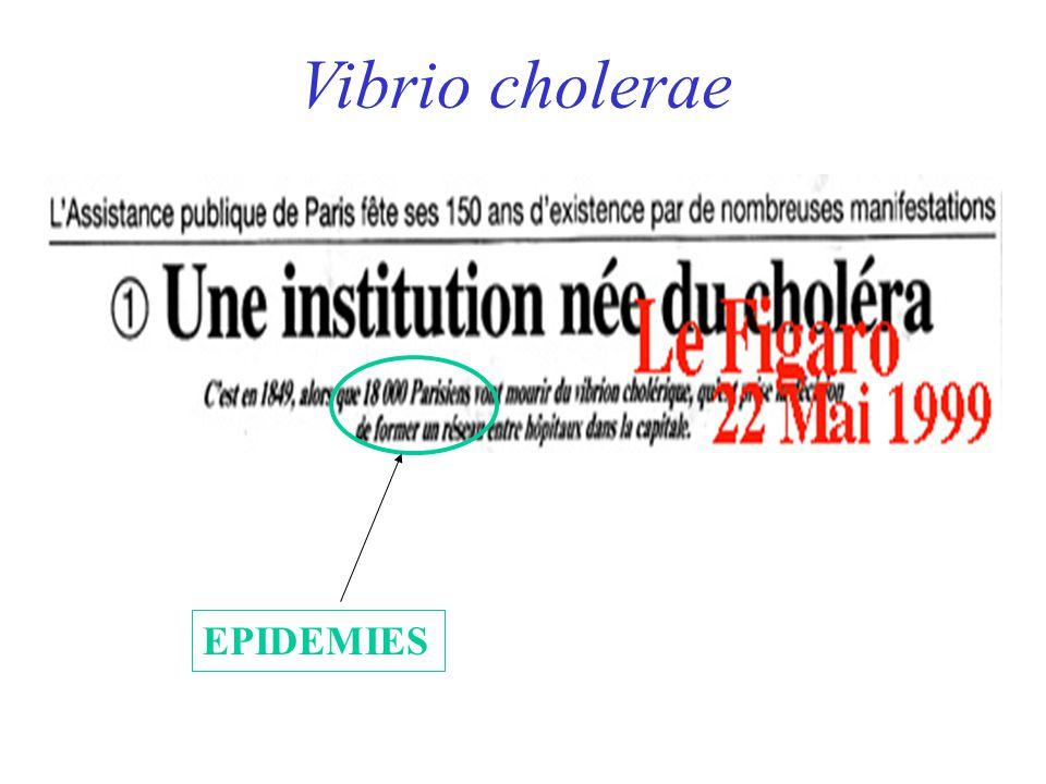 EPIDEMIES Vibrio cholerae