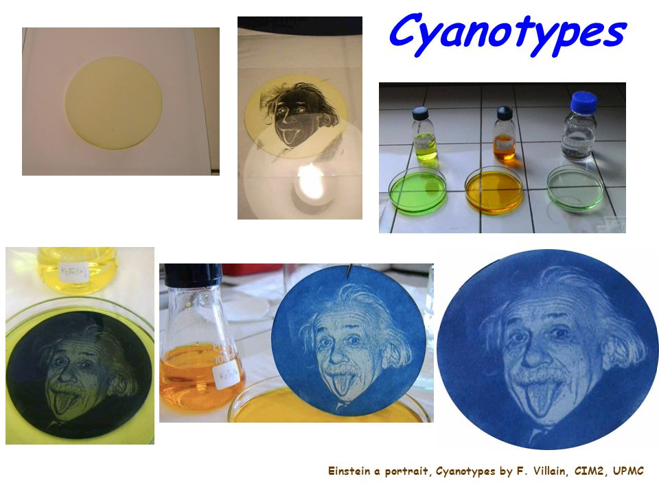 Cyanotypes Einstein a portrait, Cyanotypes by F. Villain, CIM2, UPMC