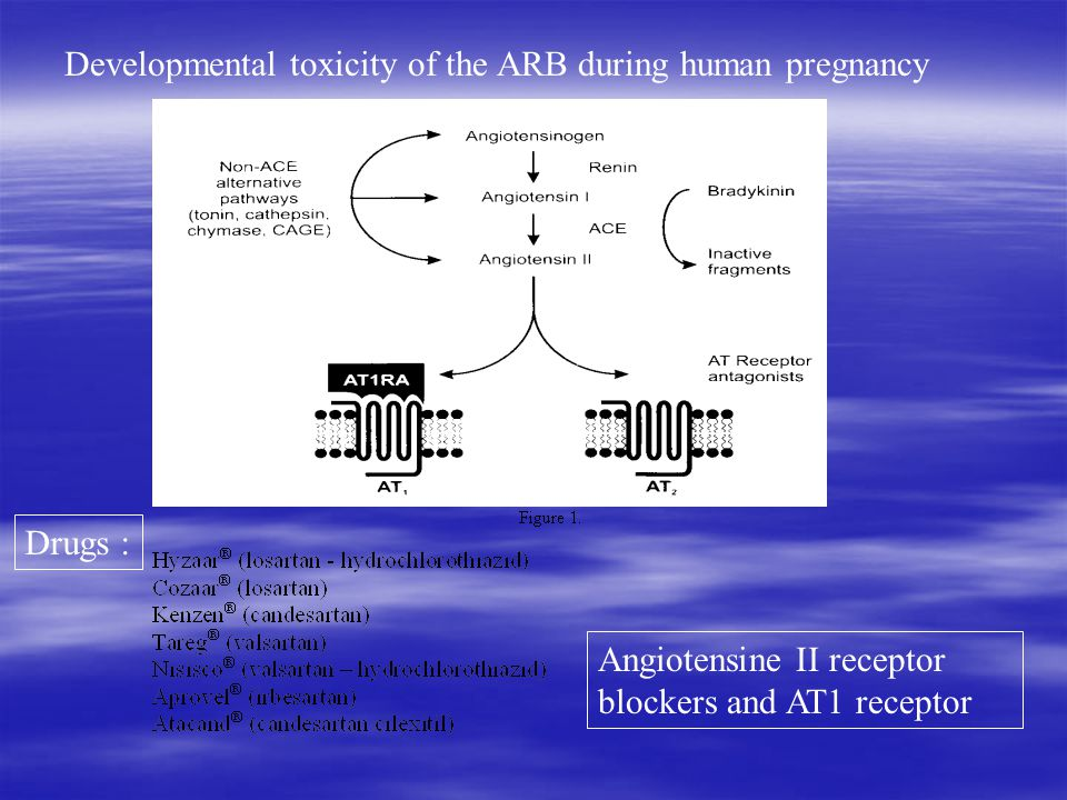 Angiotensine II receptor blockers and AT1 receptor Drugs : Developmental toxicity of the ARB during human pregnancy