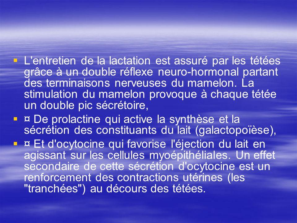 L'entretien de la lactation est assuré par les tétées grâce à un double réflexe neuro-hormonal partant des terminaisons nerveuses du mamelon. La stimu