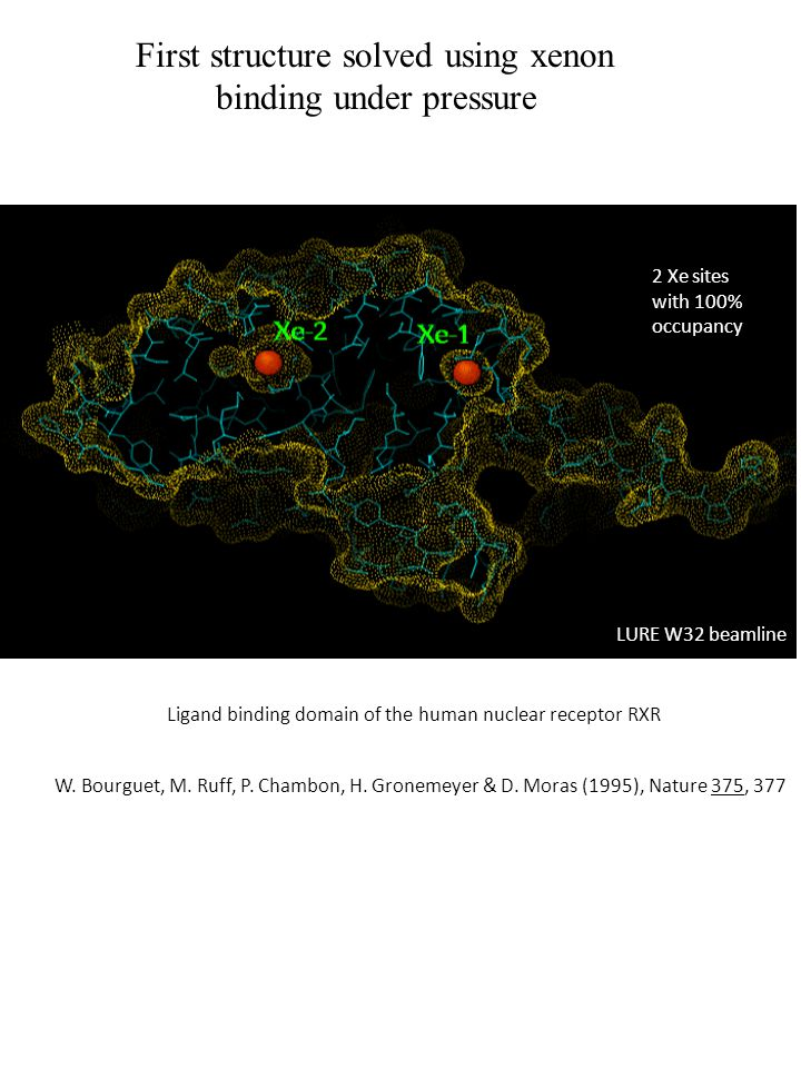 First structure solved using xenon binding under pressure 2 Xe sites with 100% occupancy LURE W32 beamline W.