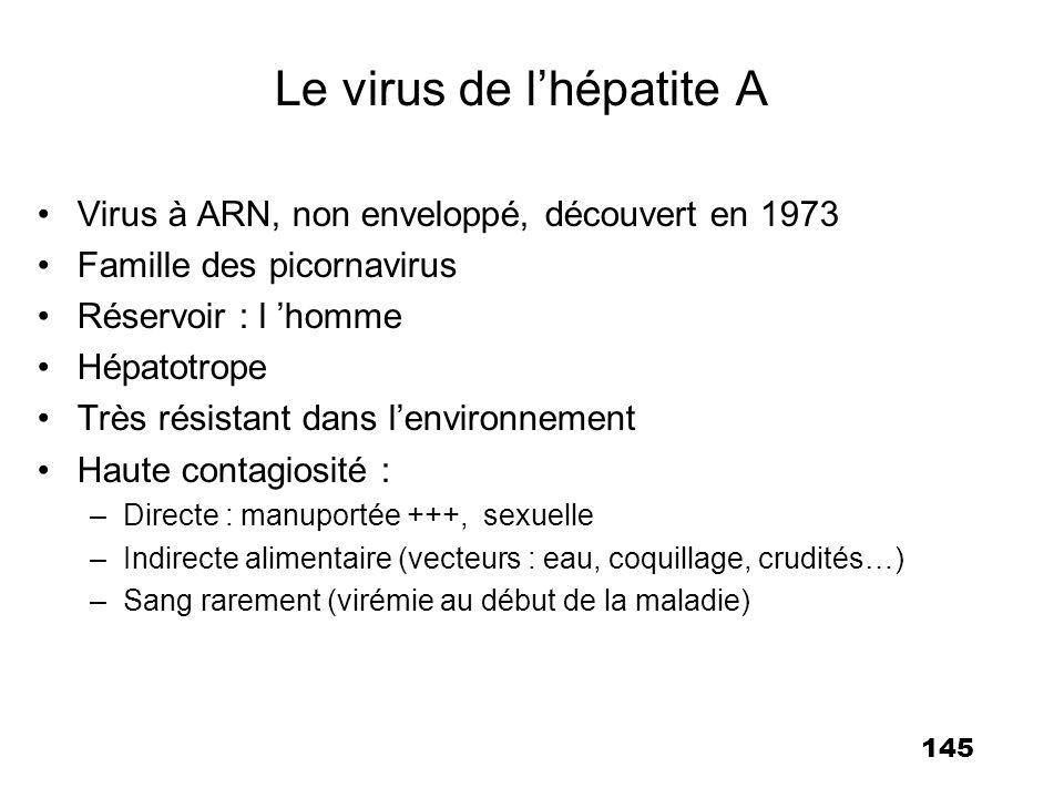 145 Le virus de lhépatite A Virus à ARN, non enveloppé, découvert en 1973 Famille des picornavirus Réservoir : l homme Hépatotrope Très résistant dans