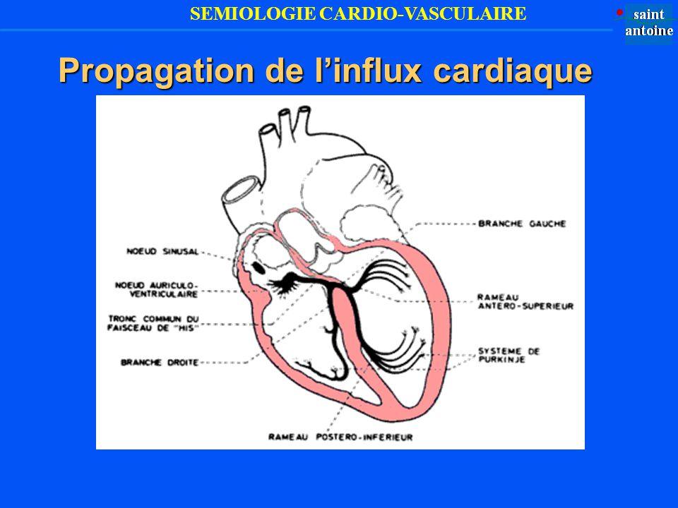 SEMIOLOGIE CARDIO-VASCULAIRE Propagation de linflux cardiaque