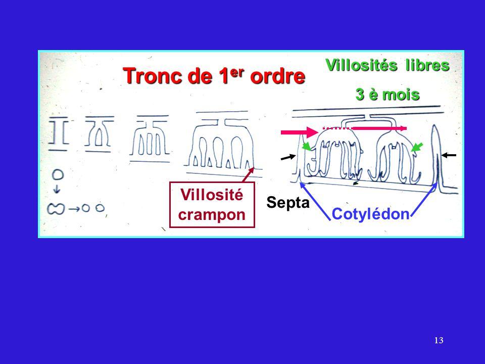 13 Septa Tronc de 1 er ordre Villosité crampon Villosités libres 3 è mois Cotylédon