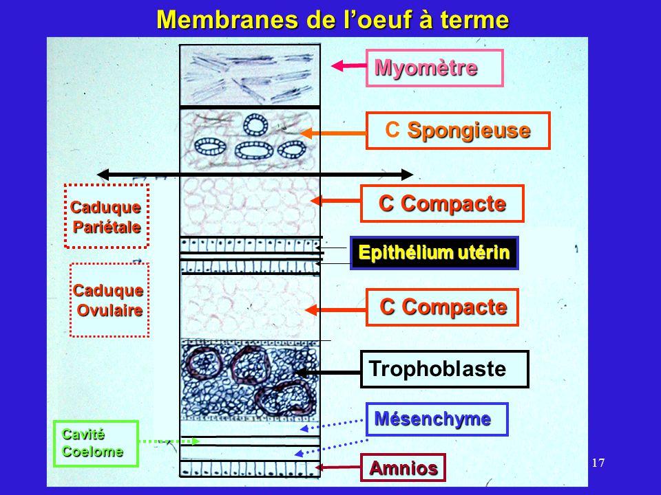 17 Amnios Mésenchyme Epithélium utérin Trophoblaste C Compacte CaduquePariétale CaduqueOvulaire Spongieuse C Spongieuse Myomètre Membranes de loeuf à terme Amnios Cavité Coelome