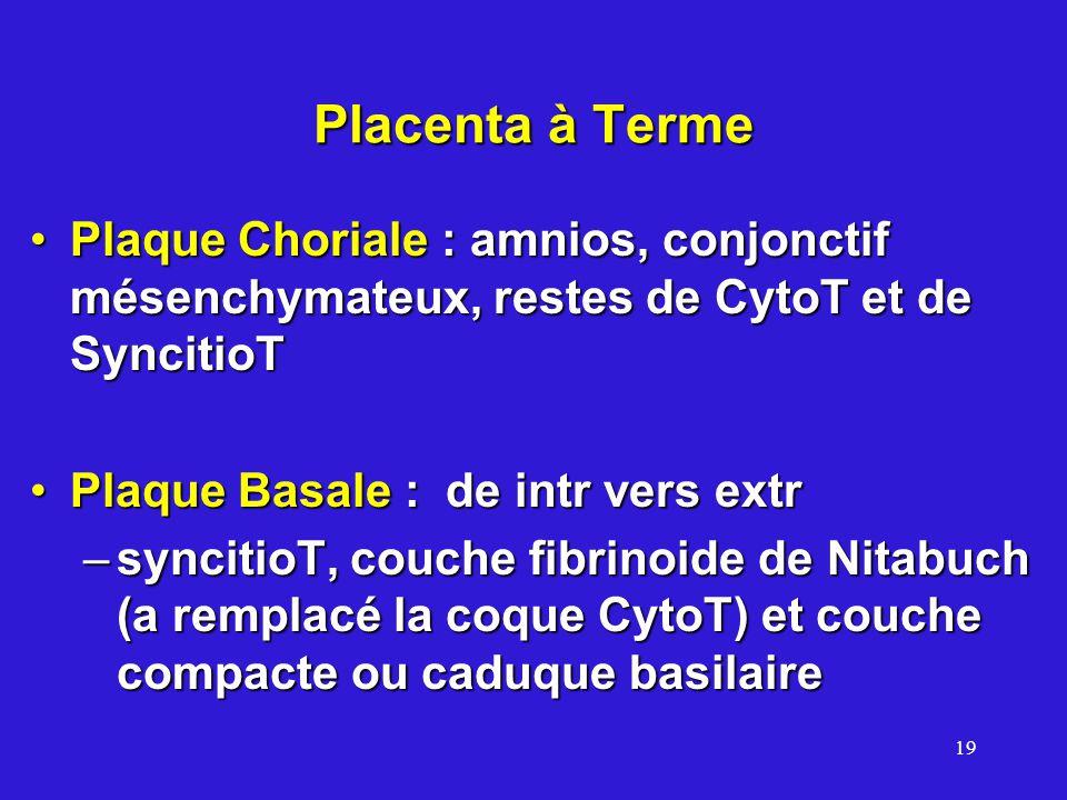 19 Placenta à Terme Plaque Choriale : amnios, conjonctif mésenchymateux, restes de CytoT et de SyncitioTPlaque Choriale : amnios, conjonctif mésenchymateux, restes de CytoT et de SyncitioT Plaque Basale : de intr vers extrPlaque Basale : de intr vers extr –syncitioT, couche fibrinoide de Nitabuch (a remplacé la coque CytoT) et couche compacte ou caduque basilaire