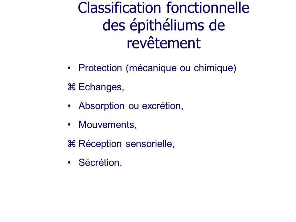 Organisation : Glandes exocrines sans canal excréteur Cellules caliciformes, Glandes intra-épithéliales, Epithélium sécrétoire.