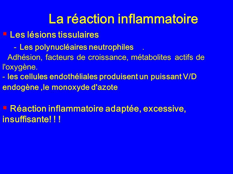 La réaction inflammatoire Les lésions tissulaires -Les polynucléaires neutrophiles. Adhésion, facteurs de croissance, métabolites actifs de l'oxygène.