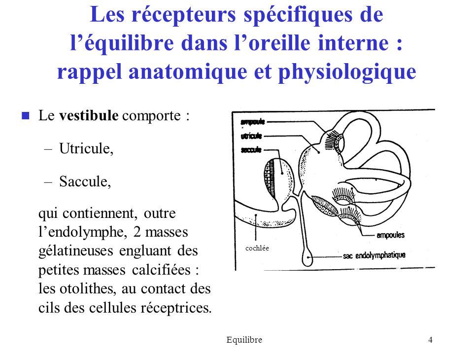 Equilibre4 Les récepteurs spécifiques de léquilibre dans loreille interne : rappel anatomique et physiologique Le vestibule comporte : –Utricule, –Sac