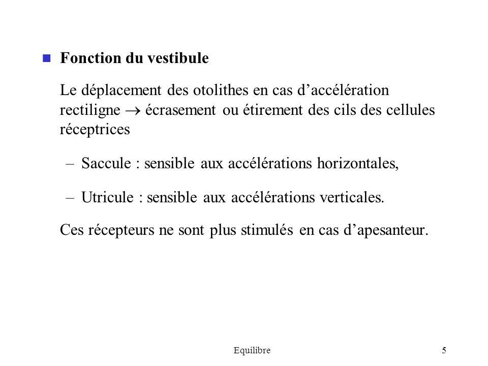 Equilibre5 Fonction du vestibule Le déplacement des otolithes en cas daccélération rectiligne écrasement ou étirement des cils des cellules réceptrice
