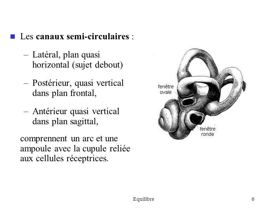 Equilibre6 Les canaux semi-circulaires : –Latéral, plan quasi horizontal (sujet debout) –Postérieur, quasi vertical dans plan frontal, –Antérieur quas